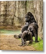 Cross River Pregnant Gorilla And Children Metal Print