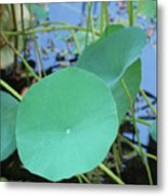 Crossing The Lily Pond Outback Nubmer Two Square Metal Print