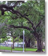 Crossing Trees Metal Print
