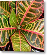 Croton - A Center View Metal Print