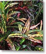 Croton 1 Metal Print by Eikoni Images