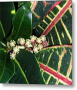 Croton Blooming Metal Print