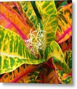 Croton Leaves Metal Print