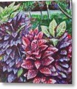 Crotons 1 Metal Print