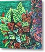 Crotons 3 Metal Print