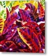 Crotons Sunlit 1 Metal Print