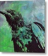 Crow II Metal Print