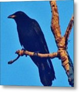 Crow In A Tree Metal Print
