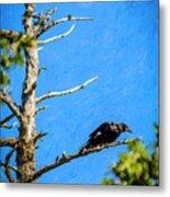 Crow In An Old Tree Metal Print
