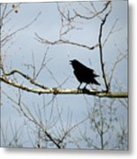 Crow In Sycamore Metal Print