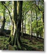 Crow Nest Woods Metal Print