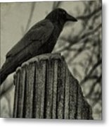 Crow Perched On A Old Column In Rain Metal Print