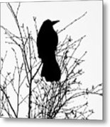 Crow Rook Perched In A Tree With Pare Branches In Winter Metal Print