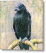 Crow Vigilant Metal Print