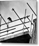 Crow Watches Over Metal Print
