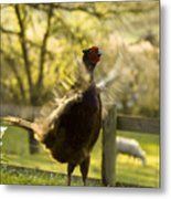 Crowing Metal Print