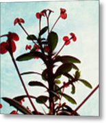 Crown Of Thorns Metal Print by Shawna Rowe