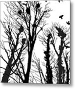 Crows Roost 1 - Black And White Metal Print