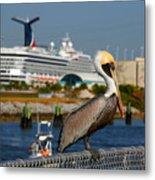 Cruising Pelican Metal Print