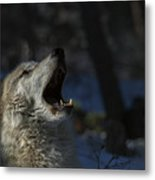 Cry In The Wild Metal Print