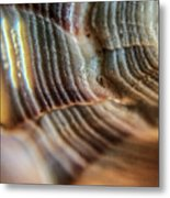 Crystals And Stones Shell 4721 Metal Print