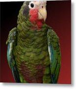 Cuban Amazon Parrot Metal Print