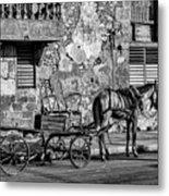 Cuban Horse Power BW Metal Print