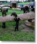 Cubs At The Playground Metal Print