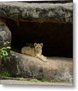 Cubs In Cave Metal Print