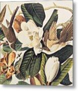 Cuckoo On Magnolia Grandiflora Metal Print