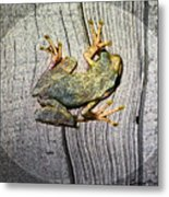 Cudjoe Key Frog Metal Print