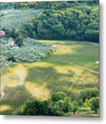 Cultivated Vineyards Tuscany  Italy Metal Print