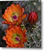 Cupric Cup Cactus Flowers Metal Print