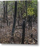 Curacao - Blooming Cacti In The Forest Metal Print