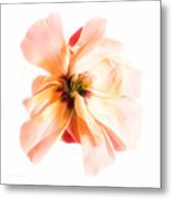 Curb Appeal Metal Print