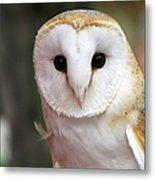 Curious Barn Owl Metal Print