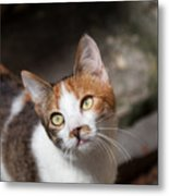 Curious Cat Metal Print