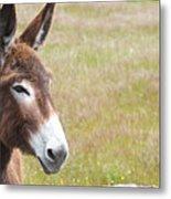 Curious Donkey Metal Print