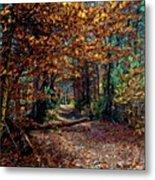 Curious Path In Autumn Metal Print