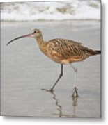 Curlew In The Surf Metal Print