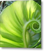 Curly Leaf Metal Print