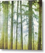 Curtain Of Morning Light Metal Print