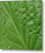 Curvy Leaf Lines Metal Print