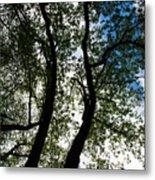 Curvy Trees Metal Print