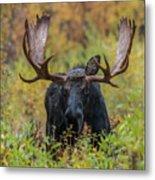 Custer In Autumn Metal Print