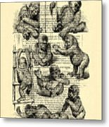 Baby Monkeys Playing Black And White Antique Illustration Metal Print