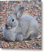 Cute Campground Rabbit Metal Print