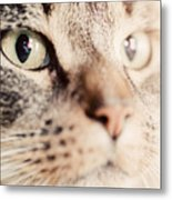 Cute Cat Close-up Portrait Metal Print