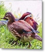 Cute Couple - Mandarin Ducks Metal Print