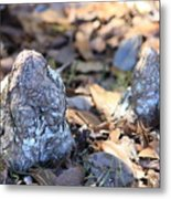 Cute Cypress Knees Metal Print